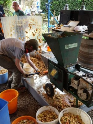 step 4 - the shredded apple is pulped using an old woodchipper machine and buckets filled with the pulp