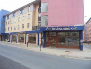 devonshire cat